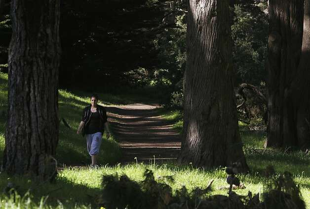 A woman walks through a grove in Golden Gate Park. Some of its trees are scheduled to be cut down. Photo: Paul Chinn, The Chronicle