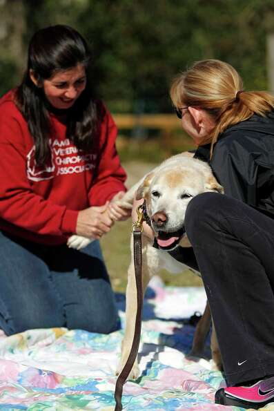 Dr. Jackie Doval works on 14-year-old Labrador named Sadi as her owner Deborah Rogers assists at the