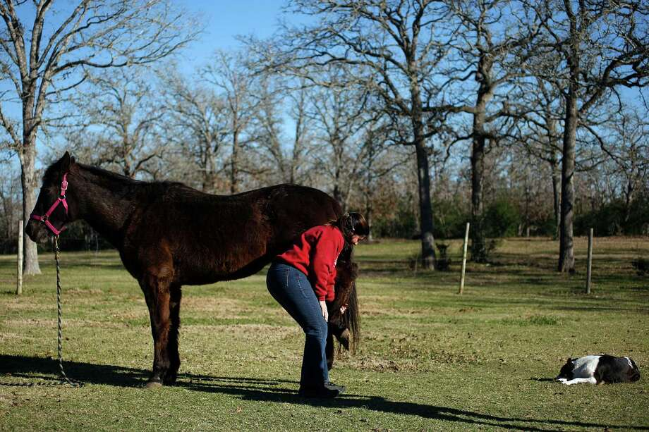 Next to a dog named Merree who she adjusted earlier, Dr. Jackie Doval, a chiropractor, works on the back leg of a 24-year-old horse named Tara at the home of one of her clients. Photo: Johnny Hanson, Houston Chronicle / © 2013  Houston Chronicle
