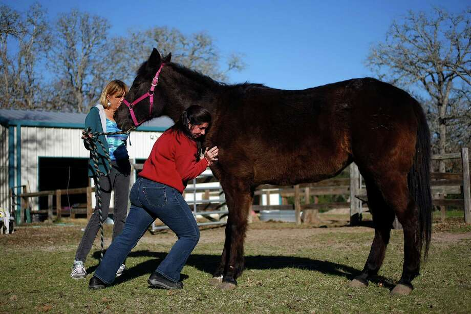 Next to her owner, Dr. Jackie Doval, a chiropractor, works on the front leg of a 24-year-old horse named Tara at the home of one of her clients. Photo: Johnny Hanson, Houston Chronicle / © 2013  Houston Chronicle