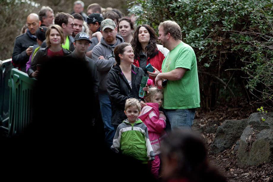 Spectators wait in line as Woodland Park Zoo's new lion cubs make their public debut on Saturday, February 16, 2013 at the zoo in Seattle. Born in November, the cubs have been acclimating to their exhibit. People have been able to catch glimpses of them in recent days, but this was the first day people could walk up to the window to view the cubs. Photo: JOSHUA TRUJILLO, SEATTLEPI.COM / SEATTLEPI.COM