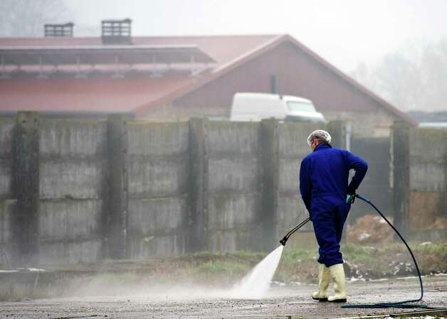 A worker cleans the area of a duck farm near Seelow, eastern Germany, Saturday. Some 14,000 ducks are being slaughtered following a bird flu outbreak at the facility. A federal laboratory confirmed on Friday that the so-called H5N1 virus had been detected at the east of Berlin _ the first such finding in Germany in more than three years. Photo: AP