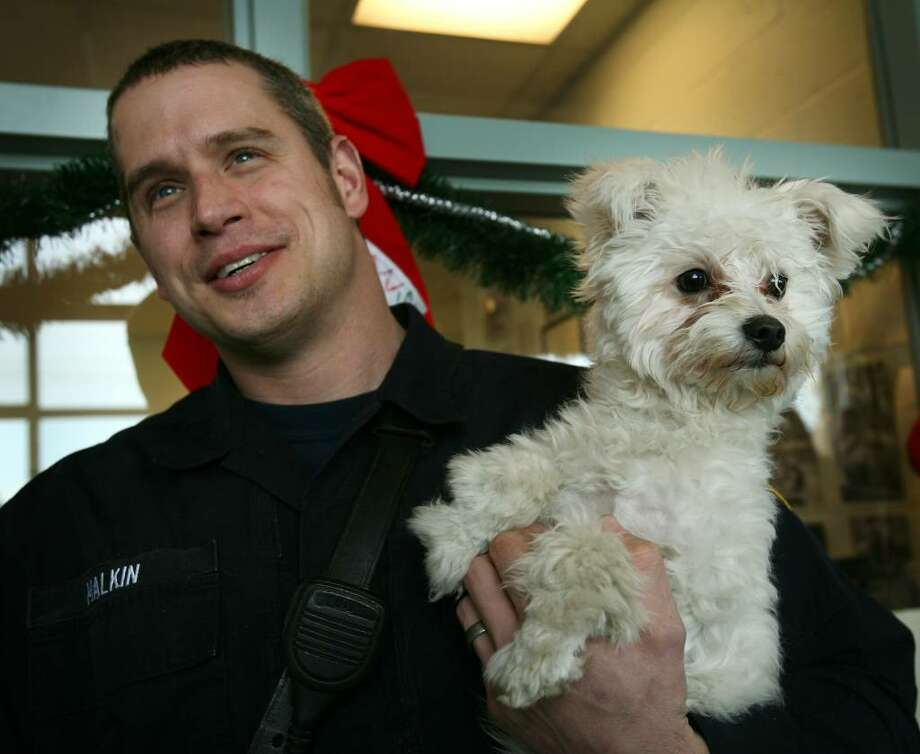 Fairfield firefighter Will Malkin holds the male Bichon Frise that he rescued from the marsh behind Fairfield Cinemas, Wednesday morning. The dog, which was wearing a collar and leash, is currently being held at Fairfield Animal Control until his owner comes forward or he becomes available for adoption. Photo: Brian A. Pounds / Connecticut Post