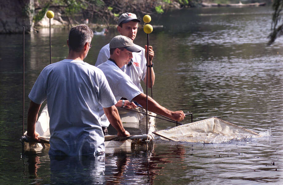 Aquatic biologists sample an area in Landa Lake near the Comal Springs for species of fish. Maintaining spring flow is crucial for endangered species and downstream users. Photo: File Photo, San Antonio Express-News