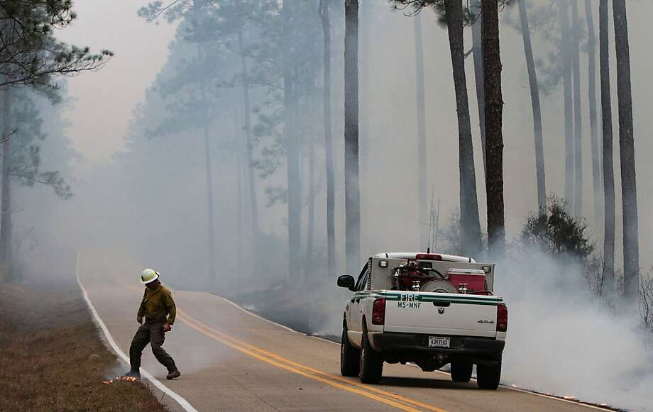 Eddie Baggett of the US Forest Service stomps out a small fire that had jumped across Blackwell Farm Road in Harrison County, Miss., where he was monitoring a control burn on Monday Feb. 18, 2013. The 2,962-acre burn in the DeSoto National Forest was held despite higher-than-usual wind conditions for a control burn. (AP Photo/Sun Herald, John Fitzhugh) Photo: John Fitzhugh, Associated Press