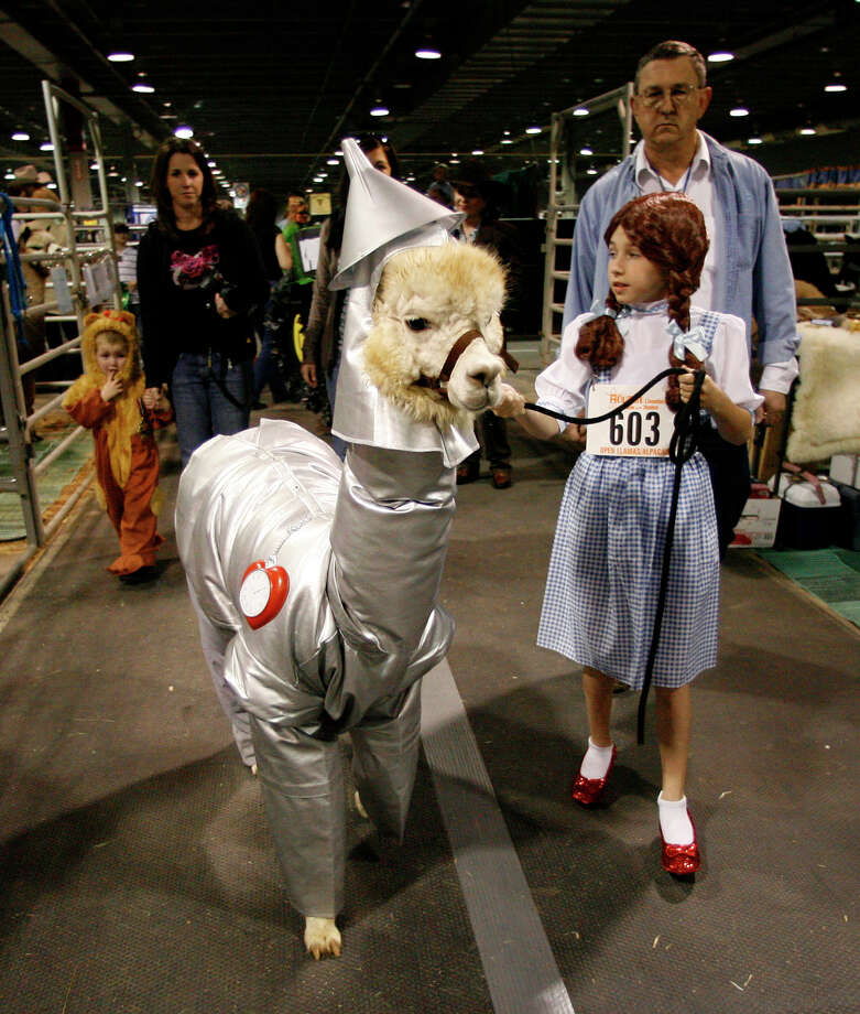 """Hannah Floyd, 9, (a.k.a. """"Dorothy"""") walks her alpaca """"Pearl"""" to the show ring (with her little brother Drew Floyd, 4, dressed as the Lion) for the Llama and Alpaca Costume and Halter show  at the Reliant Arena Sales Pavillion, during the Houston Livestock Show and Rodeo, Saturday, March 13, 2010, in Houston. ( Karen Warren / Chronicle ) Photo: Karen Warren, Houston Chronicle / Houston Chronicle"""