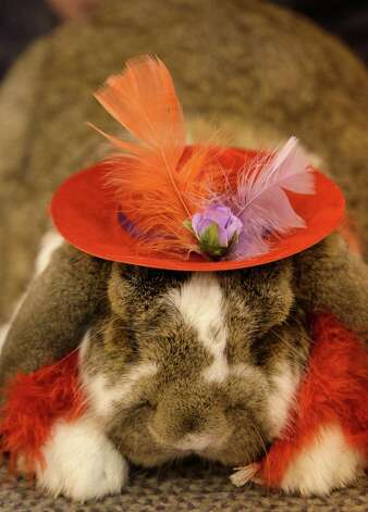 Costumed French Lop rabbit owned by Christina Strals of Pasenda during the Open Rabbit and Cavy costume contest at Reliant Center, 