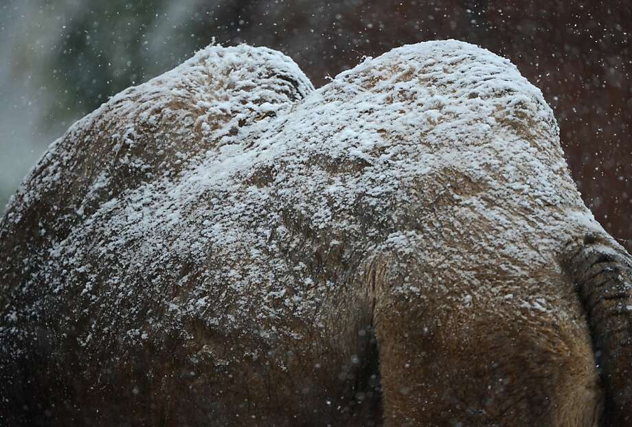 Twin peaks already dusted:Forecasters are expecting light snow accumulations in some of the higher elevations of the Frankfurt am Main Germany zoo, Germany. Photo: Arne Dedert, AFP/Getty Images