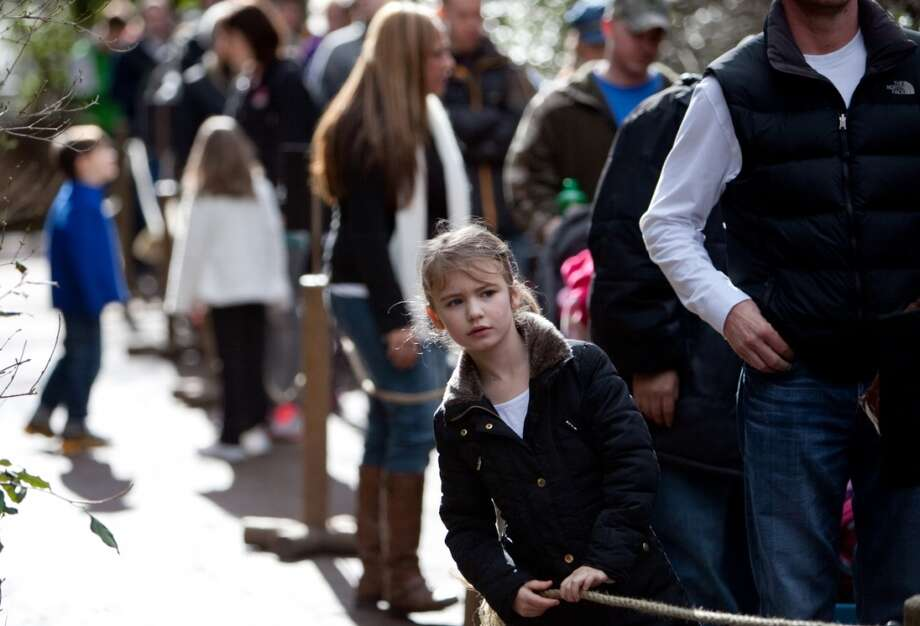 Maklaine Rogers, 7, waits in line as Woodland Park Zoo's new lion cubs make their public debut.