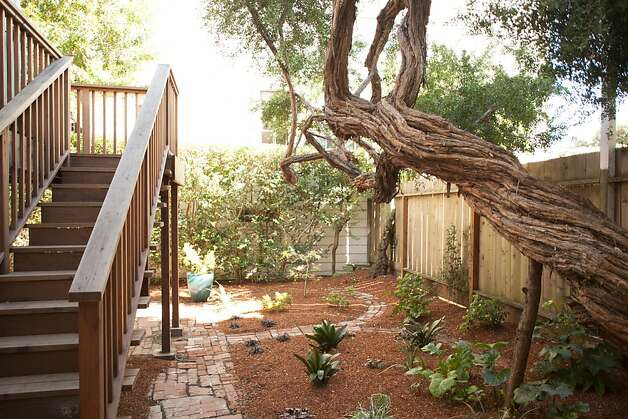 The back yard is accessible from both the upper and lower levels. Photo: Trevor Henley, Henley Photography