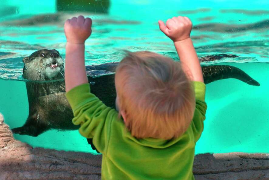 Roland Marcum watches one of the otters at the Gulf Breeze Zoo in Gulf Breeze, Florida on Wednesday,
