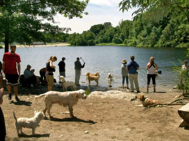Dogs with their guardians enjoy the water at Lake Mohegan open space in Fairfield, Conn. on Saturday July 21, 2012. This location is outside the designated swimming area of the lake. Photo: Cathy Zuraw / Connecticut Post