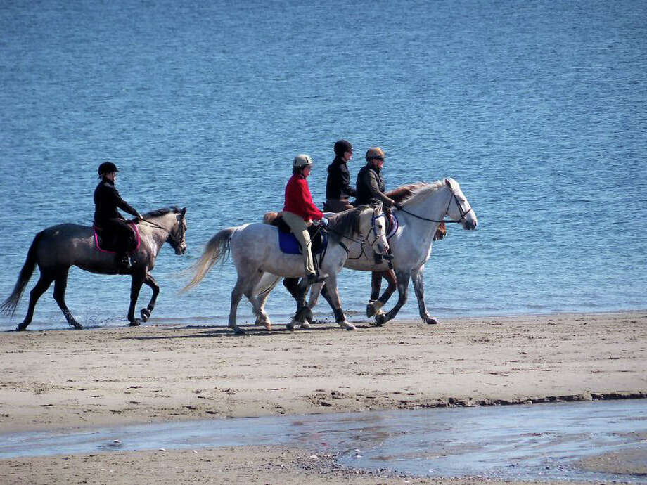 A local horseback rider told the Parks and Recreation Commission it may need to ban horses from Penfield Beach on the weekends because it is getting too crowded. Photo: Genevieve Reilly / Fairfield Citizen
