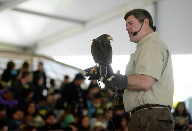 Wildlife expert Grant Kemmerer shows a Harris's Hawk to people attending the Wild World of Animals exhibition on the grounds of the San Antonio Stock Show & Rodeo on Feb. 15, 2013. Photo: Billy Calzada, San Antonio Express-News / San Antonio Express-News