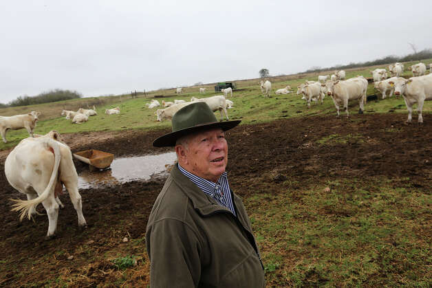 Paul Bordovsky, 90, checks out his herd of charolais cattle on his ranch a few miles east of Karnes City, Thursday, Feb. 7, 2013. The retired pharmacist and his wife, Emily, bought the 640 acres ranch in 1970 and sometime in 2009, Conoco staked out a well in his ranch. Conoco-Phillips took more that a year to drilled and frack the first deep horizontal well in Karnes County. For the month of November 2012, the county ranked first for oil production in Texas with 3 million barrels. Photo: Jerry Lara, San Antonio Express-News / ©2013 San Antonio Express-News