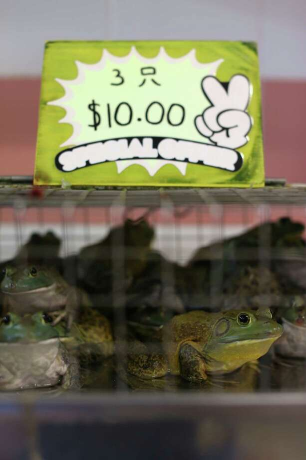 The market has frogs, too.  Photo: Cameron Spencer, Getty / 2013 Getty Images