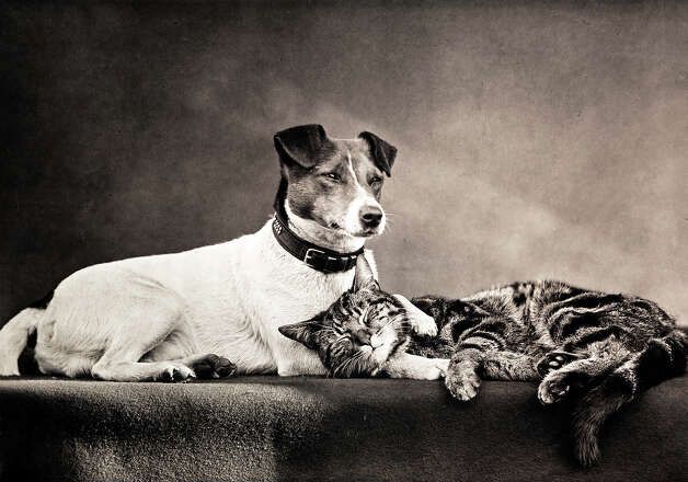 Cat and dog, 1889. Photo: Royal Photographic Society, Getty Images / SSPL/NMeM/Royal Photographic Society
