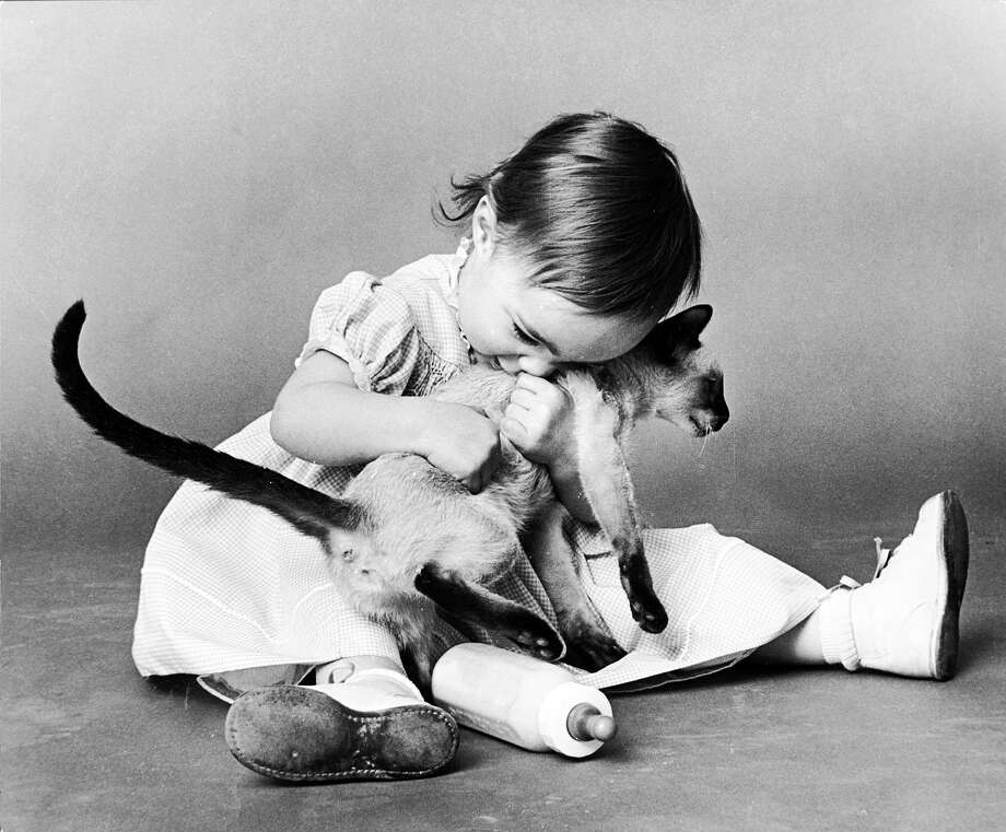 A toddler holding a Siamese cat, 1956. Photo: Nocella, Getty Images / Hulton Archive