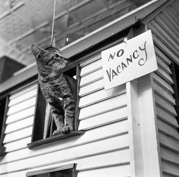 A kitten observes a 'No Vacancy' sign on a cat 'house' from an adjacent window ledge, 1950.