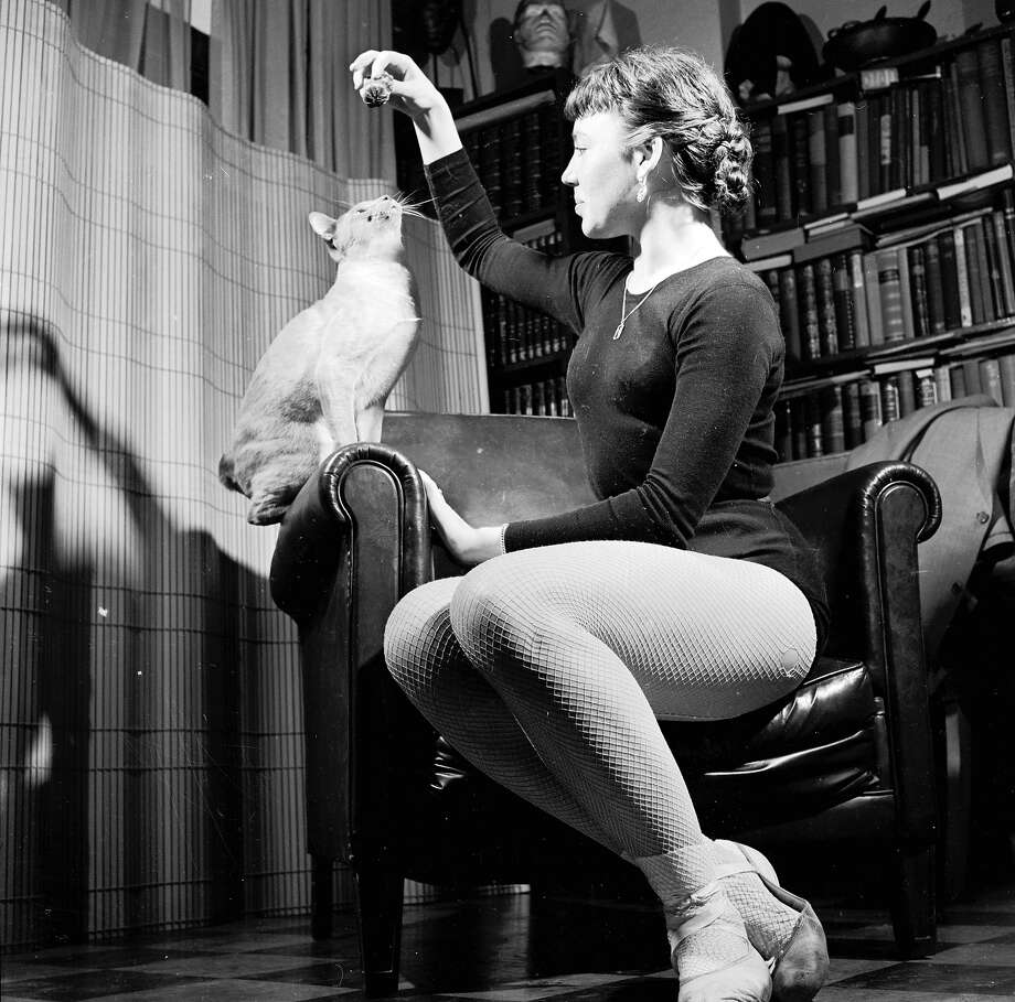 A ballet dancer encourages a Siamese cat who is sitting on the arm of her chair to jump up for a tit-bit, 1950. Photo: George Pickow, Getty Images / Hulton Archive