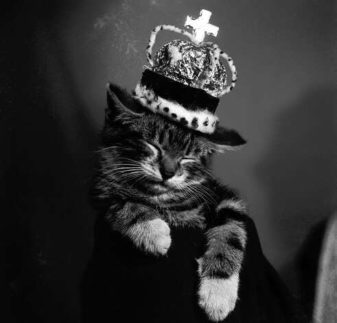 A sleeping kitten wearing a miniature crown, 1955. Photo: Charles Ley, Getty Images / Hulton Archive