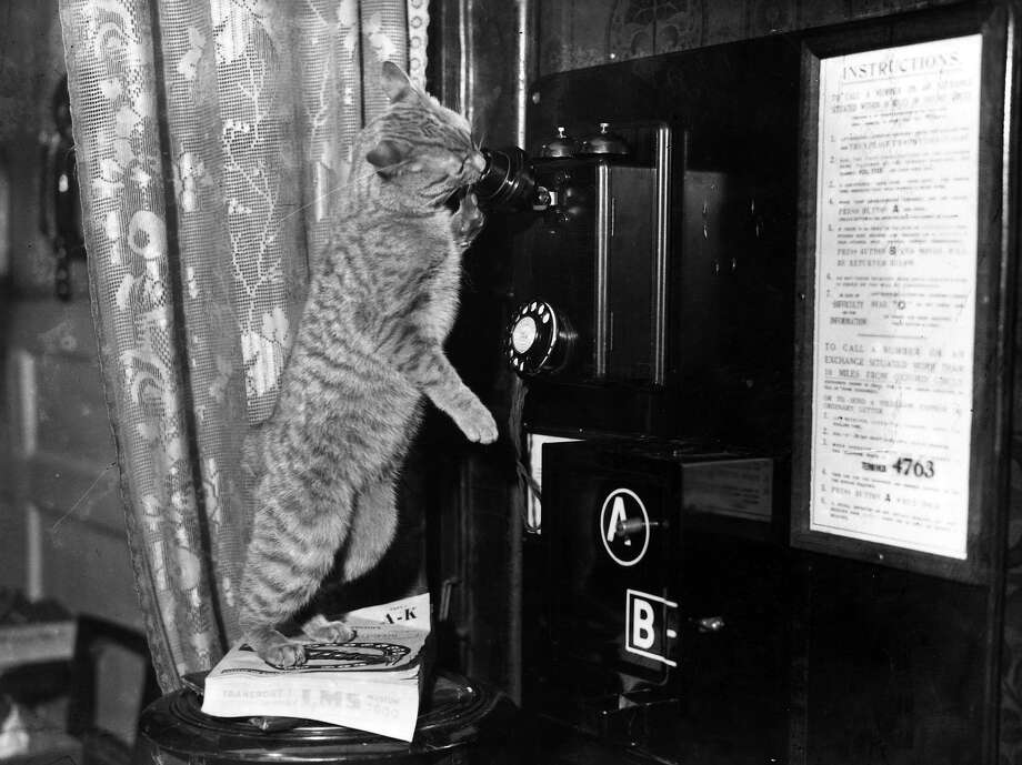Ginger, a young cat trying to join in the conversation, when the phone is answered, 1934. Photo: Reg Speller, Getty Images / Hulton Archive
