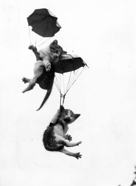 A pair of kittens with parachutes falling from the sky, 1955.