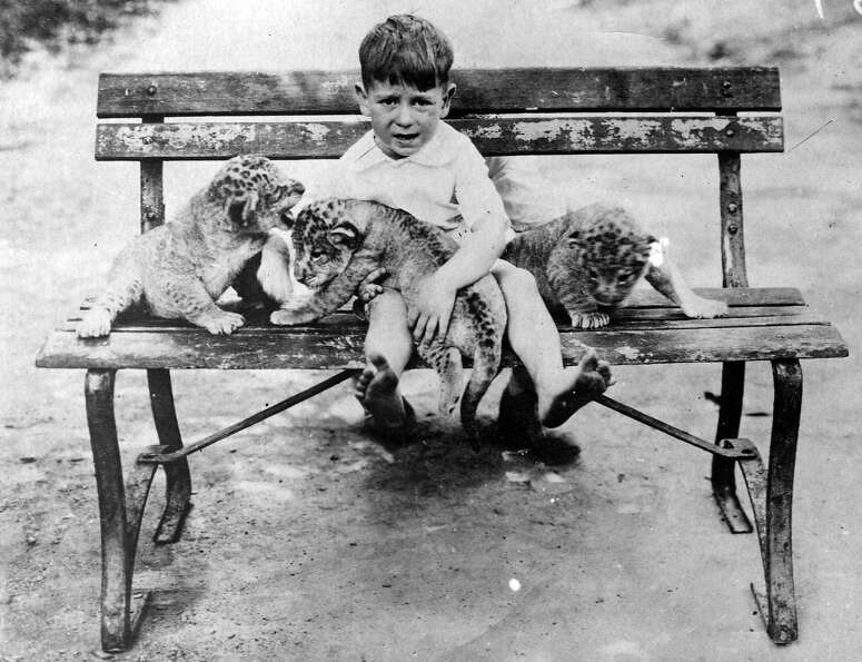 A five year old helps to mind some Lion cubs in Tennessee Zoo, 1923.