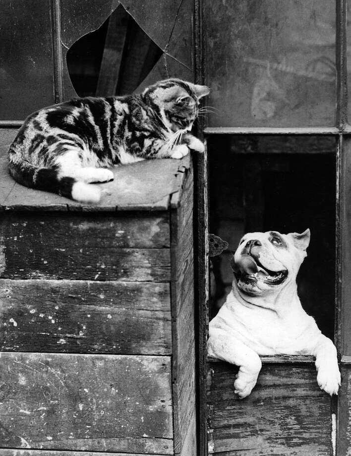 A cat and dog appear to be willing to put up with one another at close range, 1933. Photo: Fox Photos, Getty Images / Hulton Archive