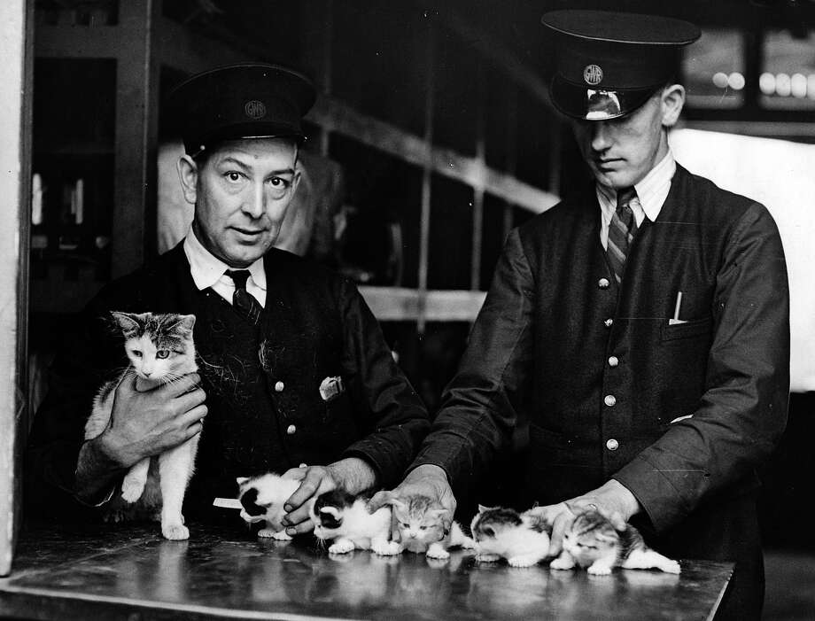 Tiddles, the station cat at Newport, Monmouthshire, is given  a hand with her five new kittens by the railway guards, 1937. Photo: Fox Photos, Getty Images / Hulton Archive