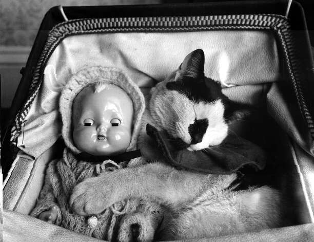 Whisky the cat was 'babysitting' for young Jaqueline Hewitt's doll, but found it so comfortable in the pram that he fell asleep on the job, 1954. Photo: Fox Photos, Getty Images / Hulton Archive