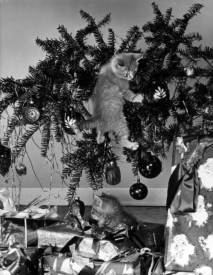 A kitten hangs from a fallen Christmas tree while another sits in the wrapping of the presents below, 1945. Photo: Lambert, Getty Images / Archive Photos