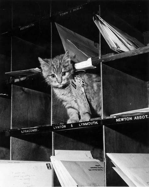 A stray kitten is bound for the Lynton and Lynmouth district of Devon in 1952.
