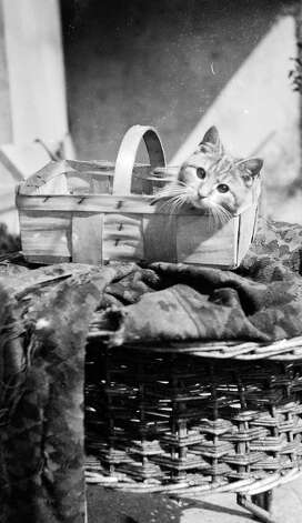 A kitten in a basket, 1932. Photo: Frances Partridge, Getty Images / Hulton Archive