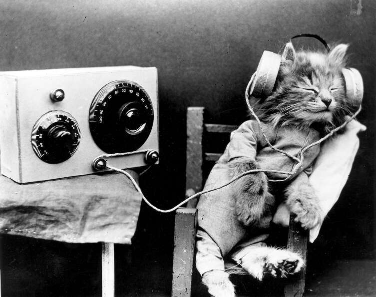A cat wearing headphones to listen to a radio in 1926.