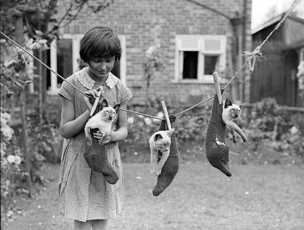A little girl hangs three Siamese kittens on a washing line in a garden in London in 1931. Photo: Fox Photos, Getty Images / Hulton Archive