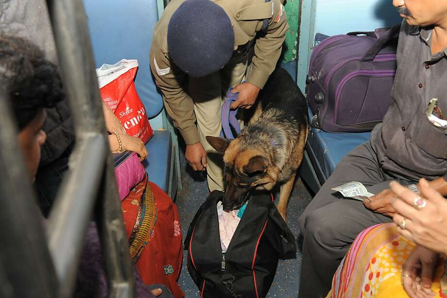 A nose for contraband:An Indian Railway Police sniffer dog inspects a passenger's belongings at the main railroad station in Ahmedabad following a serial bombing in Hyderabad. Photo: Sam Panthaky, AFP/Getty Images