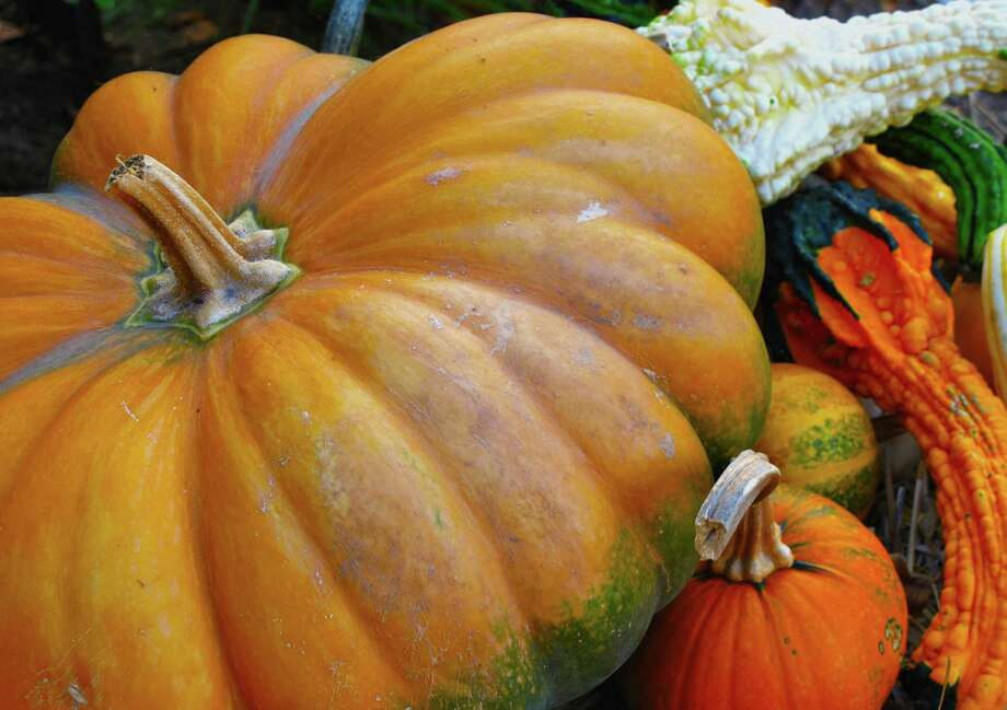 Pumpkins are easy to grow and can get kids interested in gardening. (Associated Press) Photo: Dean Fosdick