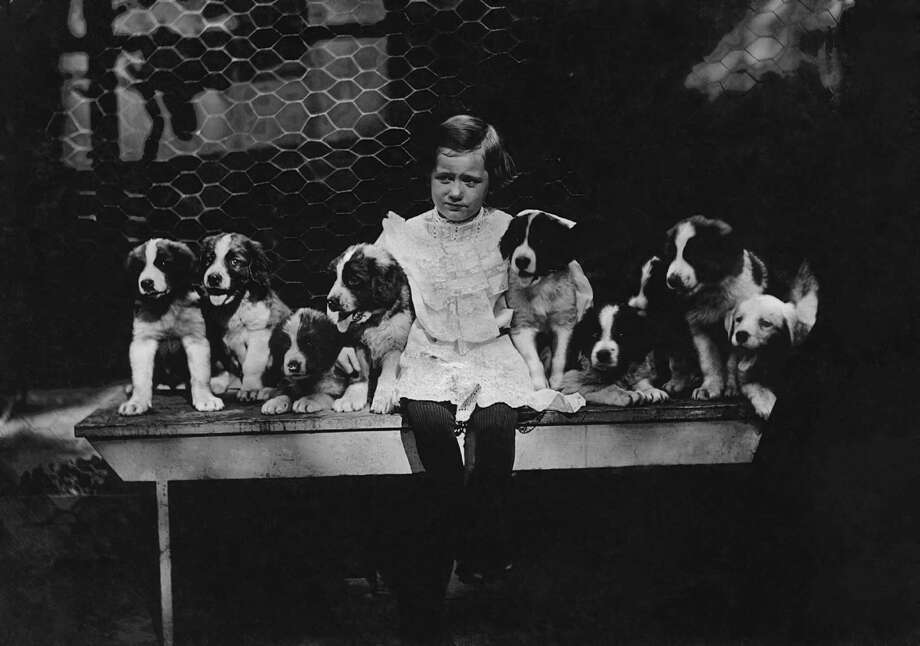 A little girl sitting with a group of puppies, circa 1910. Photo: Paul Thompson/FPG, Getty Images / 2011 Getty Images