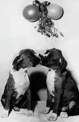 Dogs kissing, 1930. Photo: Keystone-France, Getty Images / 1930 Keystone-France