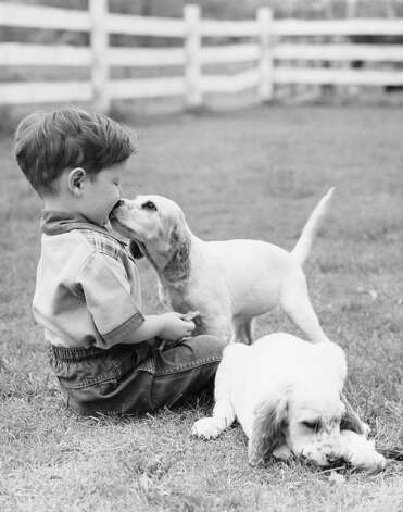 A little boy sitting in grass with one setter puppy licking face and another lying in grass beside him, 1950. Photo: H. Armstrong Roberts, Getty Images / Retrofile