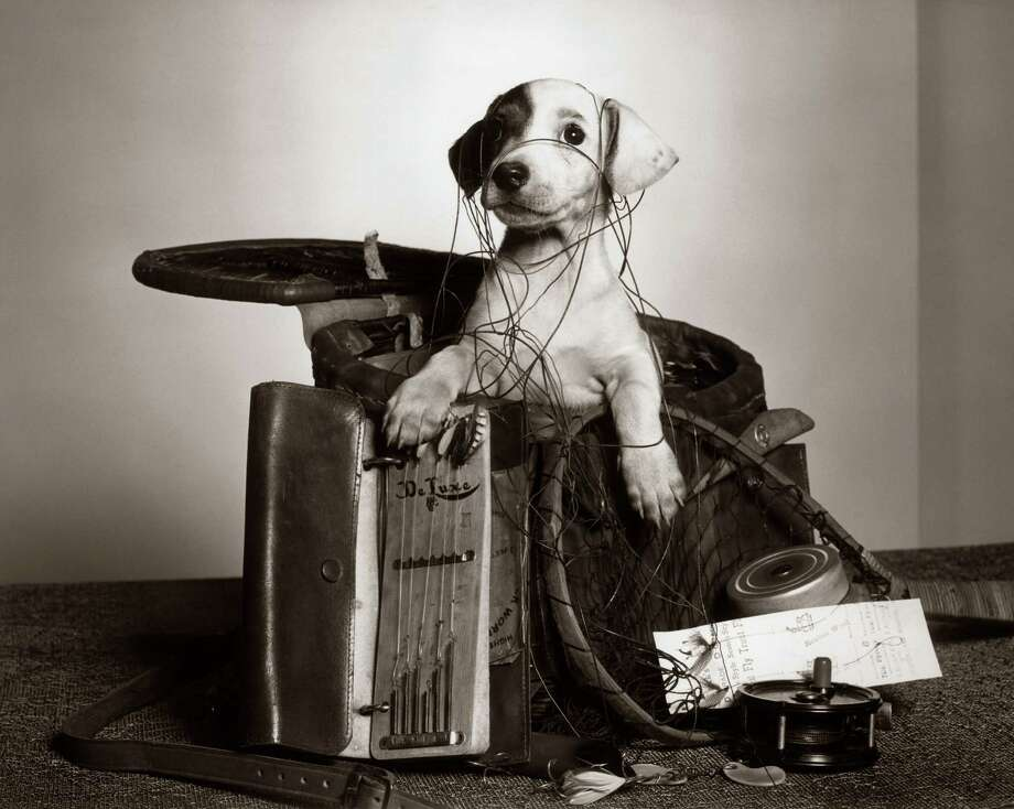 Puppy, 1950. Photo: H. Armstrong Roberts, Getty Images / Retrofile