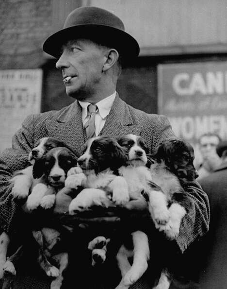 Man holding puppies at Club Row Pet Mark.
