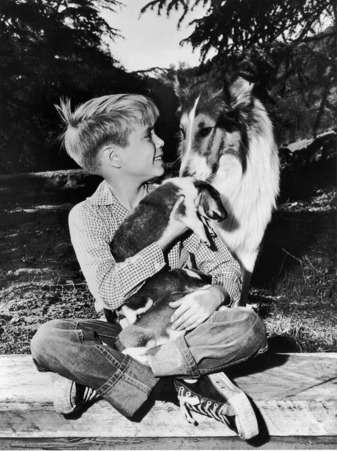 American child actor Jon Provost holds Collie puppies his lap while sitting with Lassie in a promotional portrait for the TV show, 'Lassie,' 1958. Photo: Hulton Archive, Getty Images / Moviepix
