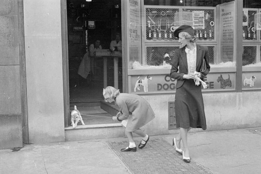A little puppy is reluctant to leave the Complete Dog Service shop, 1940.