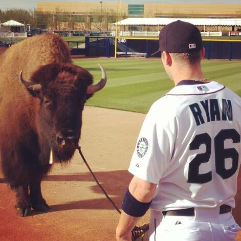 Harvey the bison stares down Mariners shortstop Brendan Ryan on Tuesday.