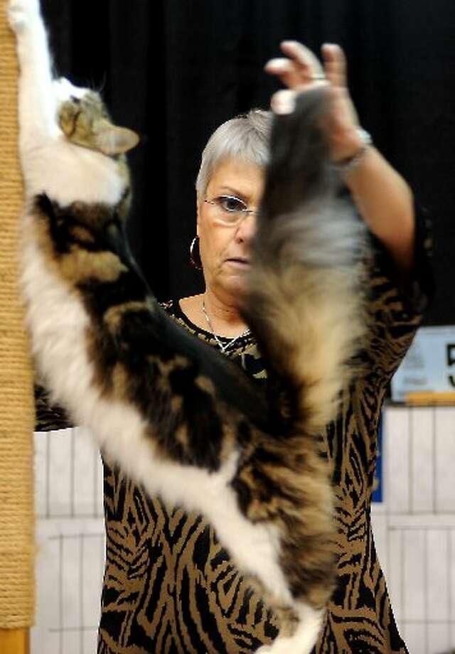 Tammy McKinley/cat5