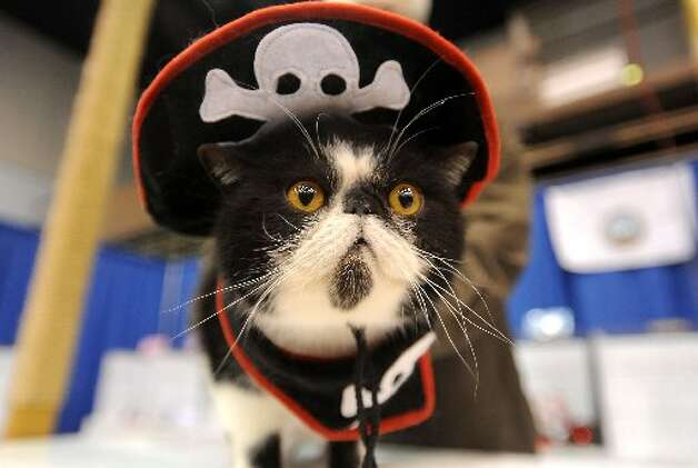 Cupid competes in a pirate costume. Tammy McKinley/cat5