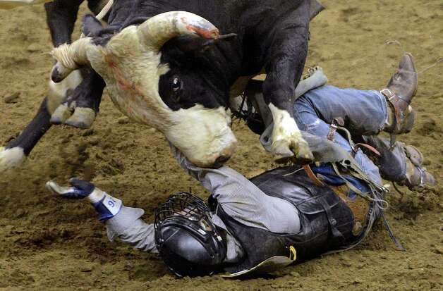 Cameron Bland faces the bull that just tossed him during the bull riding competition at the San Antonio Stock Show & Rodeo in the AT&T Center on Thursday, Feb. 21, 2013. Photo: Billy Calzada, San Antonio Express-News / San Antonio Express-News