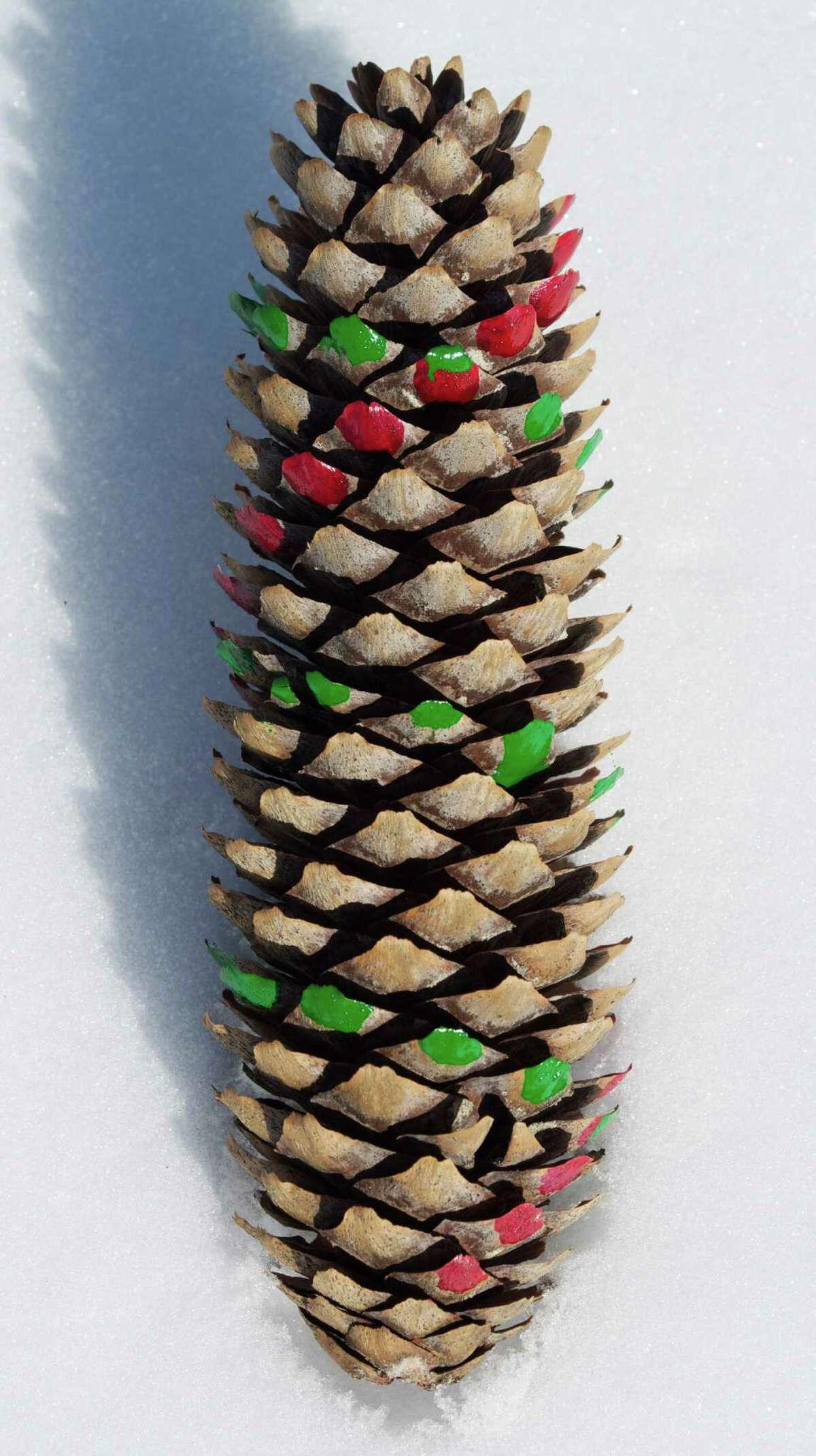 A spruce cone shows a Fibonacci sequence.